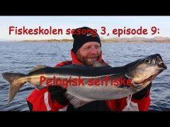 Fiskeskolen s3e9 Pelagisk Seifiske m/handleliste