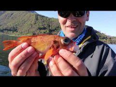 Havfiskeskolen s2e4 m/handleliste