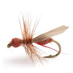 Flying Ant Cinnamon