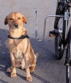 Dogman stabilt sykkelfeste til hund